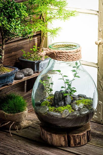small jar with piece of forest with self ecosystem - terrarienpflanzen stock-fotos und bilder