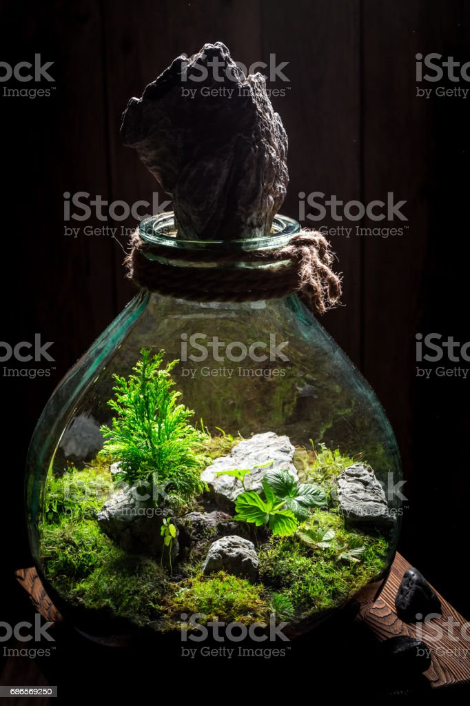 Small jar with piece of green forest royalty-free stock photo