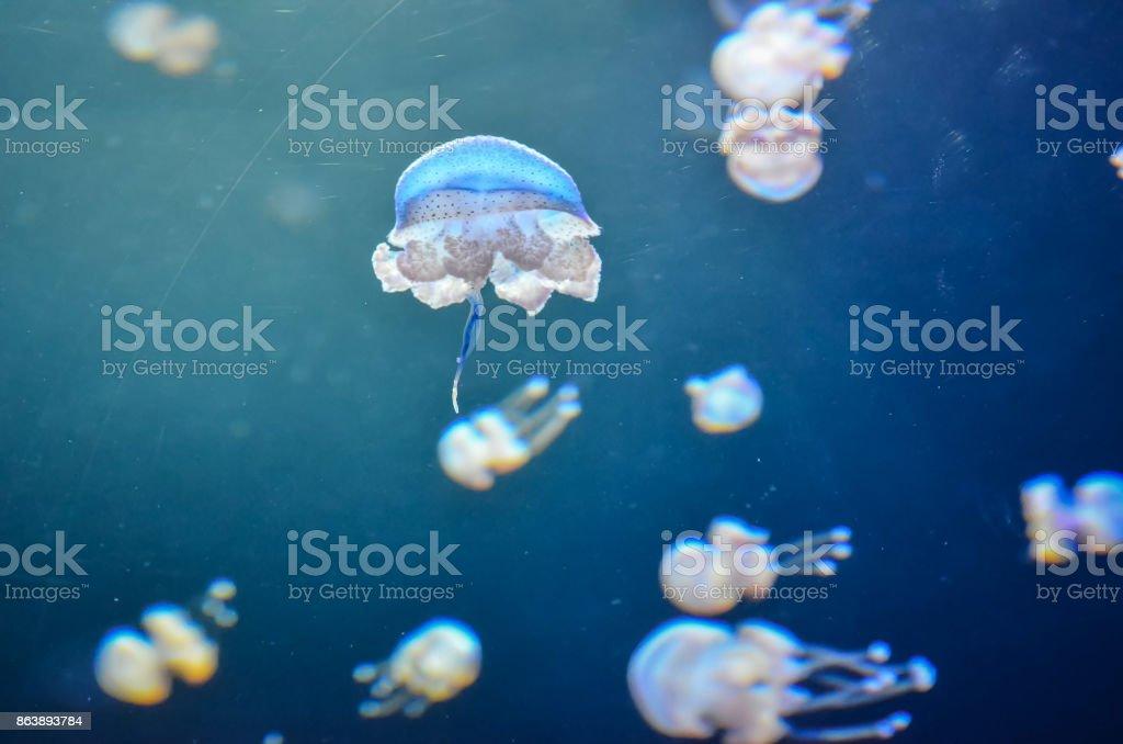 Small Jelly Fish stock photo