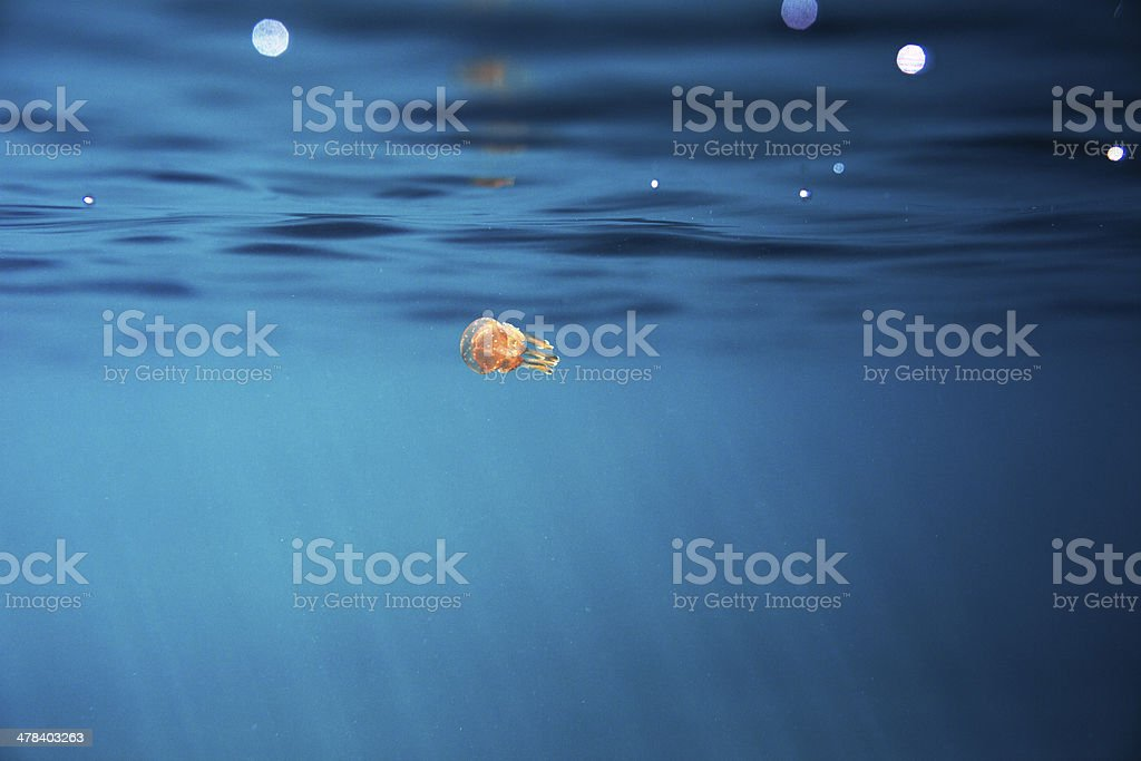 Small jellyfish royalty-free stock photo