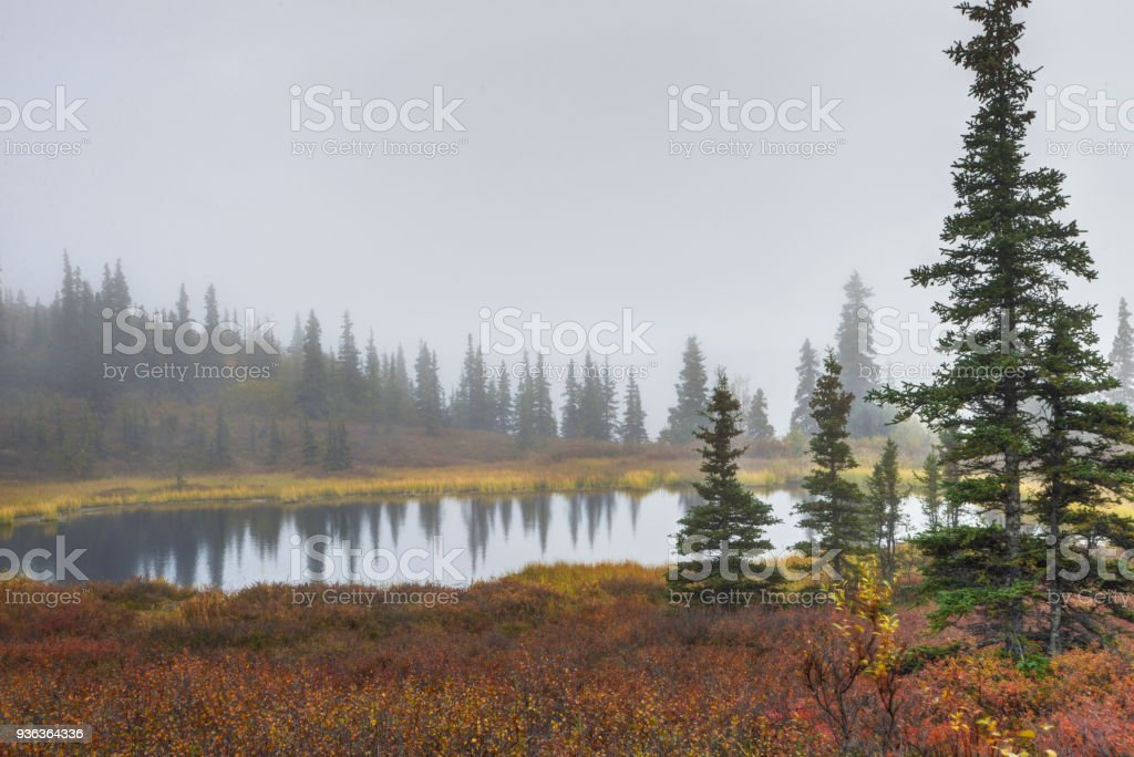 A small kettle pond in Denali National Park surrounded with fog. stock photo