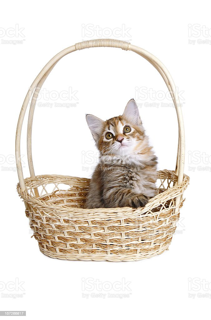 Small kitten in straw basket. royalty-free stock photo