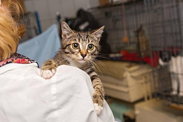 Small kitten into the hands of doctor picture id589438206?b=1&k=6&m=589438206&s=612x612&w=0&h=bfex25vzszptatu8gjcxuqbqqgi3pcztvwzpmdrad14=