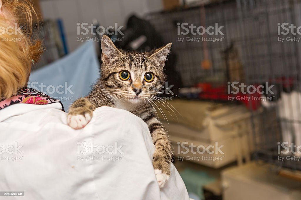 Small kitten into the hands of doctor stock photo