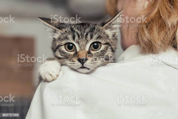 Small kitten into the hands of the physician picture id605757050?b=1&k=6&m=605757050&s=612x612&h=2 4t6ab97xt6en3naze8cuoum4ud pypw0u8jy6u6ec=