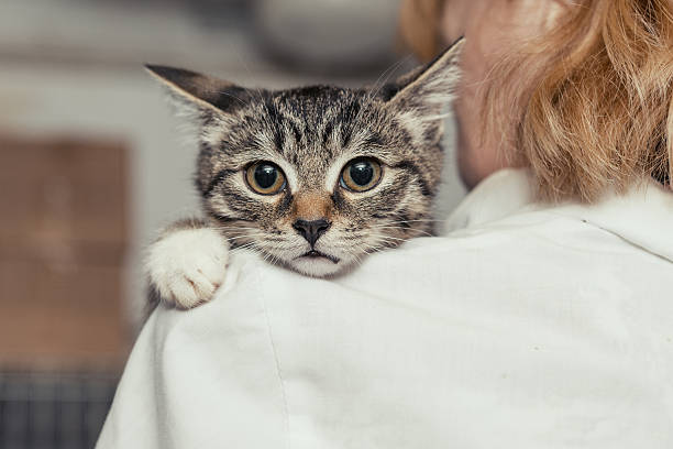 Small kitten into the hands of the physician Small, frightened kitten into the hands of the physician of the shelter for homeless animals scared cat stock pictures, royalty-free photos & images