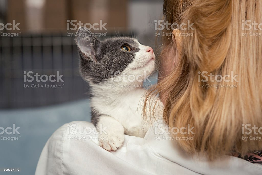 Small kitten into the hands of the physician stock photo