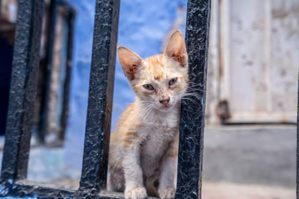 小さな子猫はチェフチャウエンの通りの肖像画のポーズします。 ストックフォト