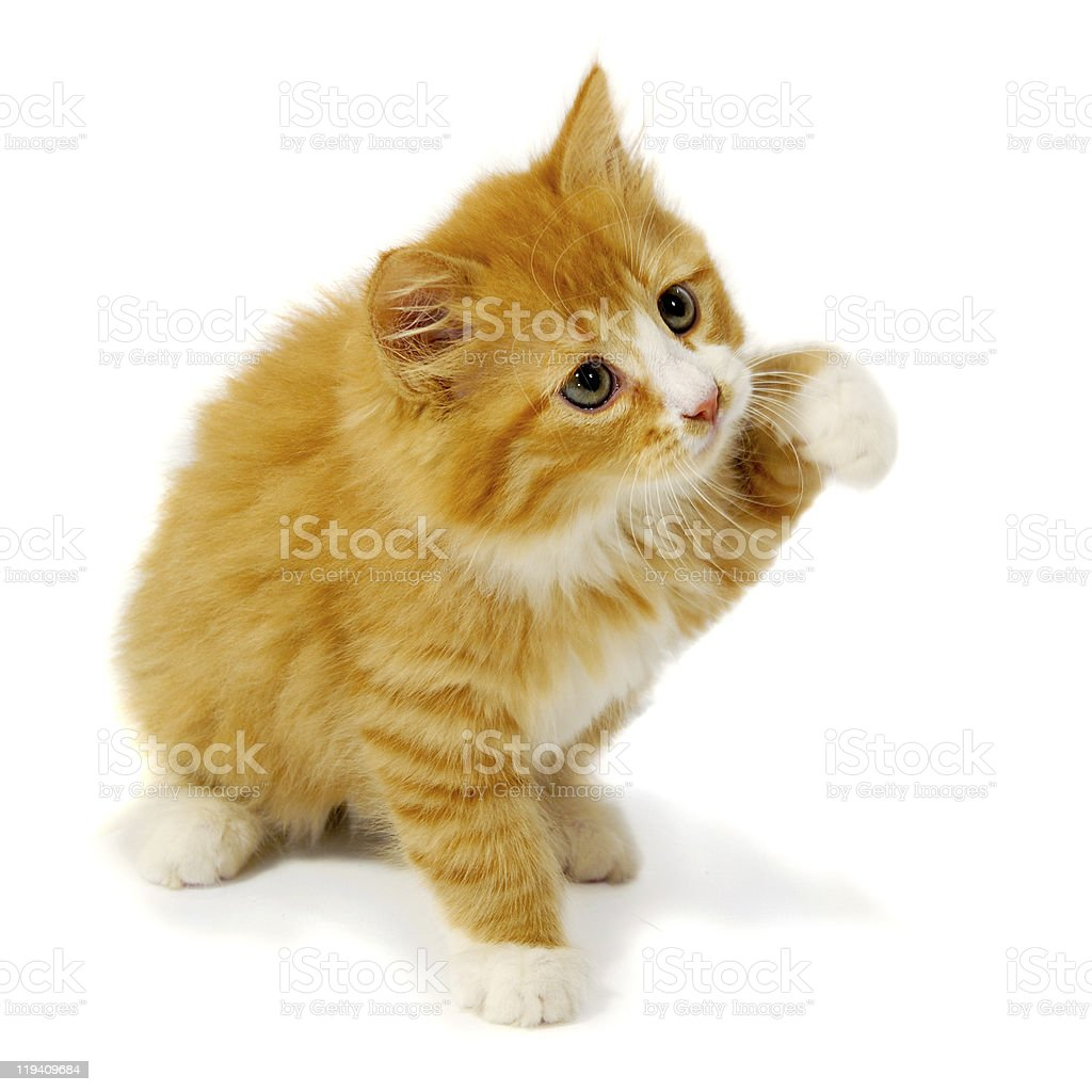 Small kitten royalty-free stock photo