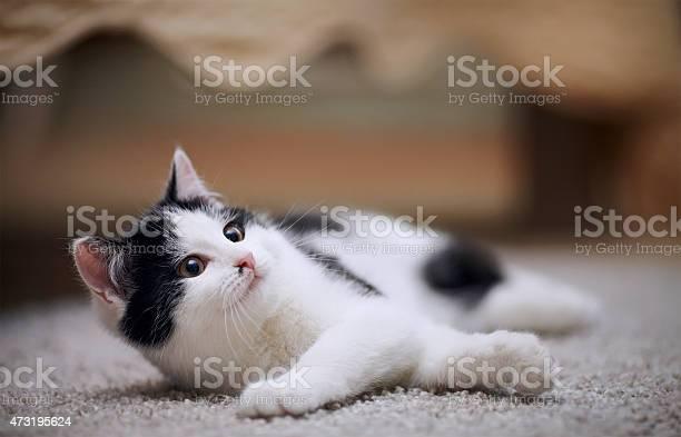 Small kitten picture id473195624?b=1&k=6&m=473195624&s=612x612&h=ufj bhxcwxq t4q8cmlgbzmzubnteok6vrs9n7g1l70=