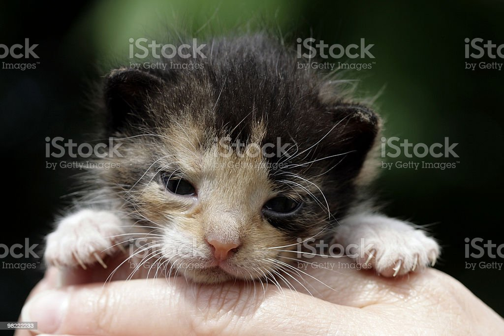 Small kitten royalty-free stock photo