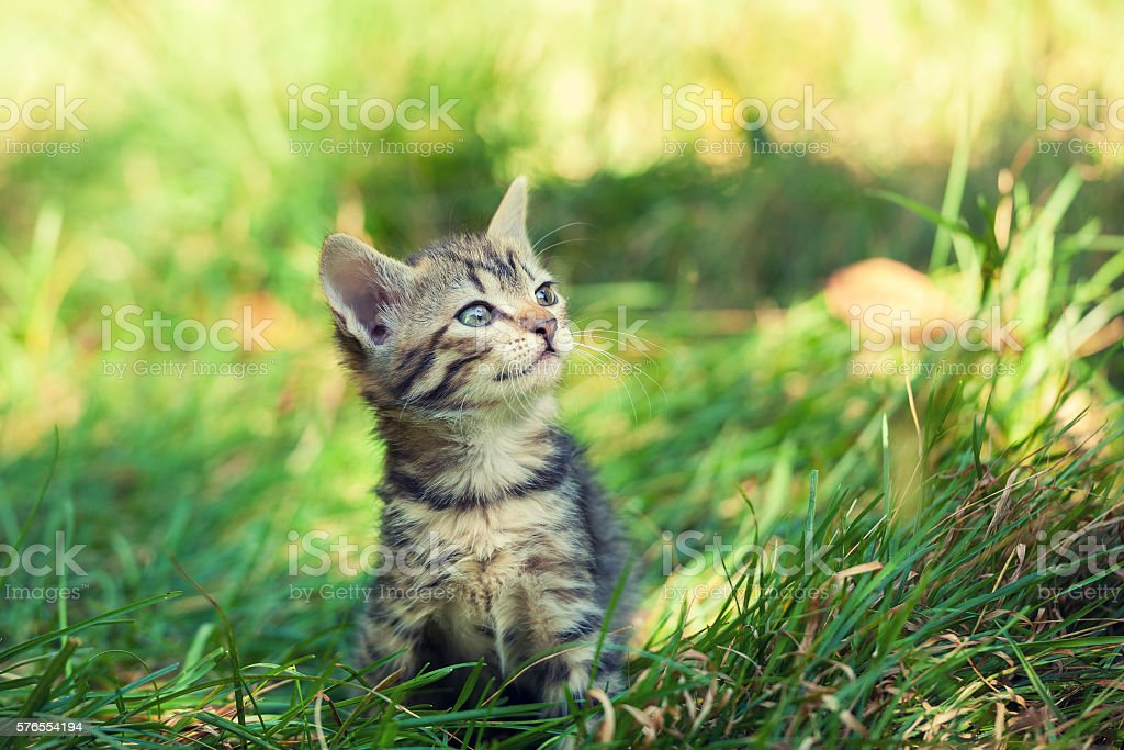 small kitten sitting on the grass – Foto