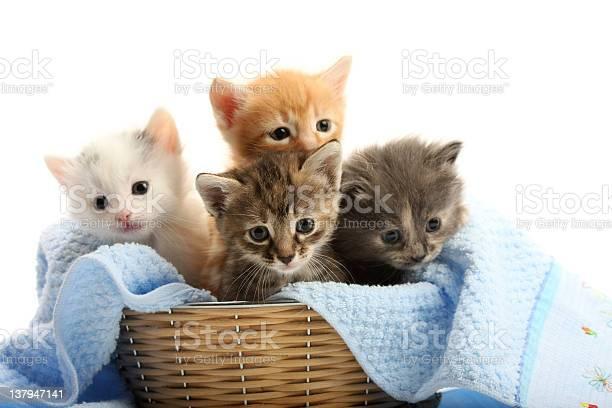 Small kittens in straw basket picture id137947141?b=1&k=6&m=137947141&s=612x612&h=jrqkdciznj3j3g3s1n wi7zk6ktibh3xa0ai4sbenaq=