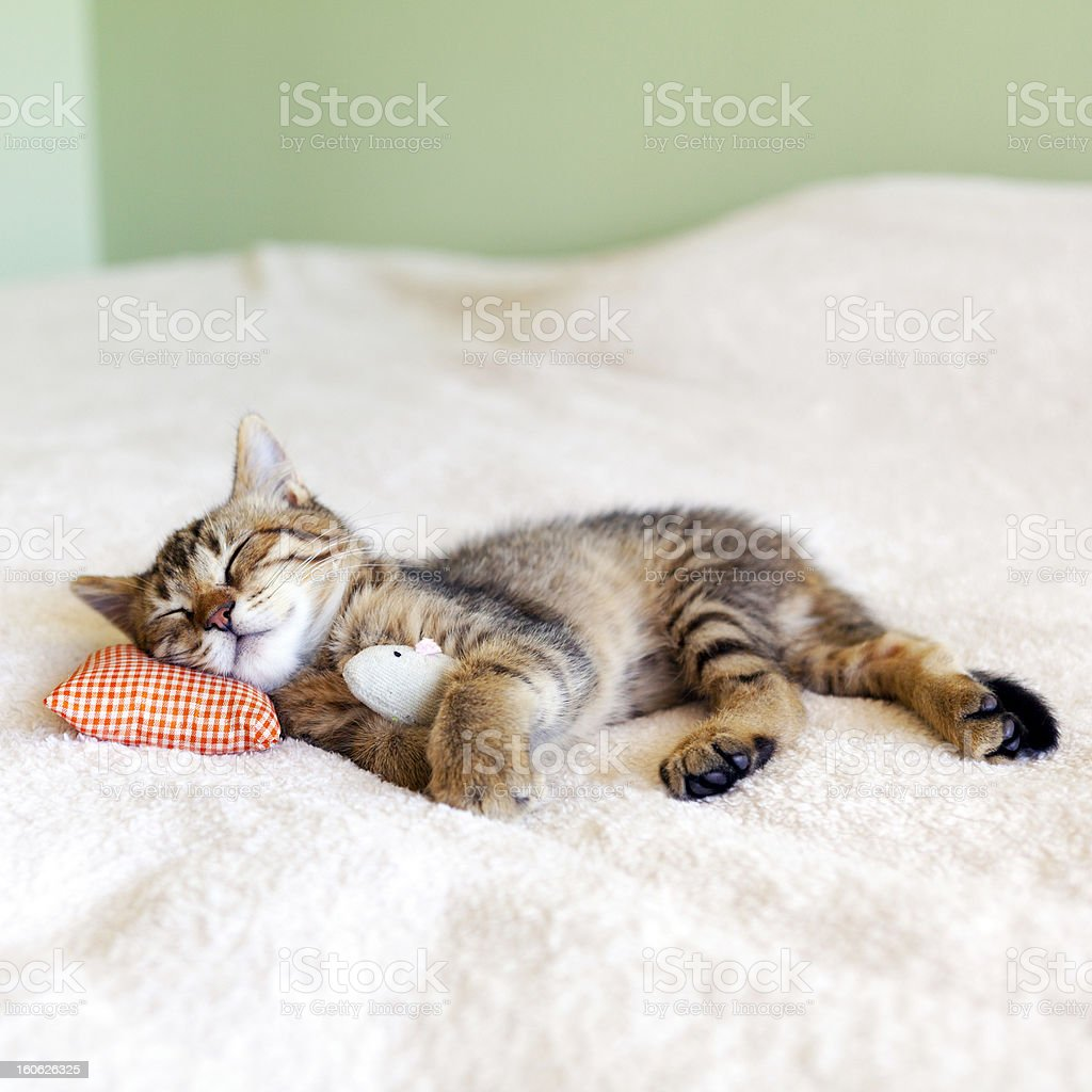 Small Kitty With Red Pillow and Mouse stock photo