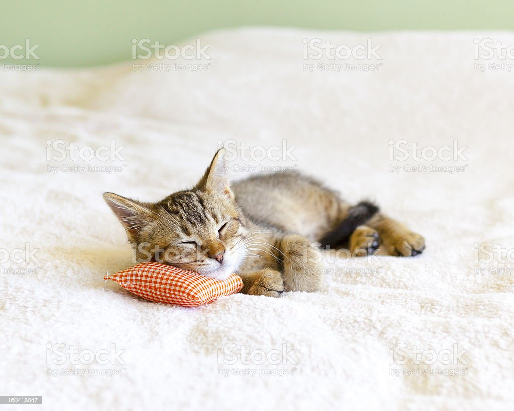 Small Kitty With Red Pillow royalty-free stock photo