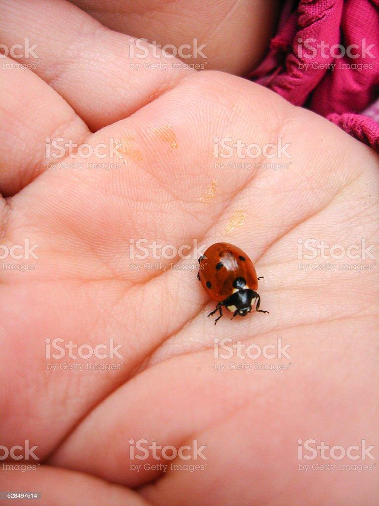small ladybird on the hand stock photo
