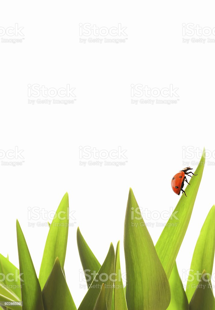 Small ladybug on green grass royalty-free stock photo