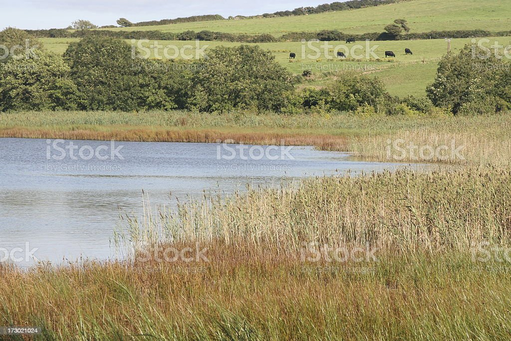 small lake and reed bed, Inchydoney Island, Clonakilty stock photo
