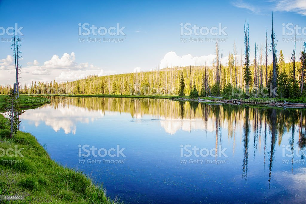 Small lake in Yellowstone park with pine forest royalty-free stock photo