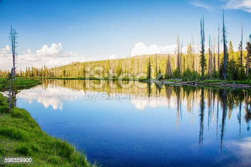 Small Lake In Yellowstone Park With Pine Forest Stock Photo & More Pictures of Beauty In Nature