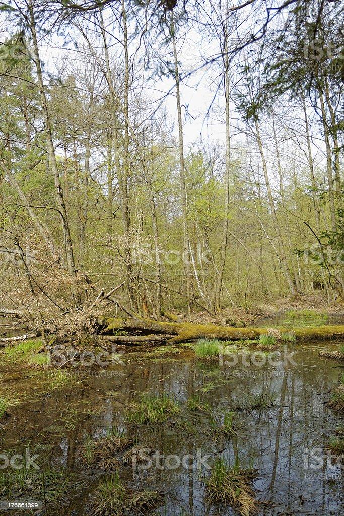 Lago pequeño foto de stock libre de derechos