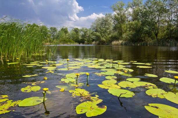 kleiner see mit lilien - wasserlilien stock-fotos und bilder