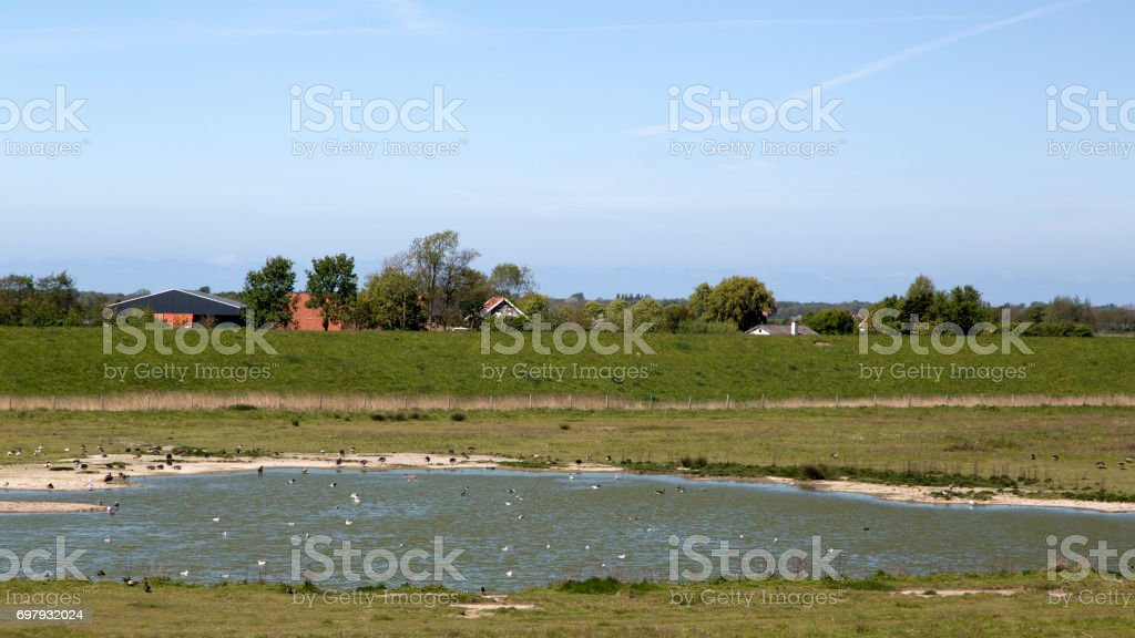 Small lake with waterbirds stock photo