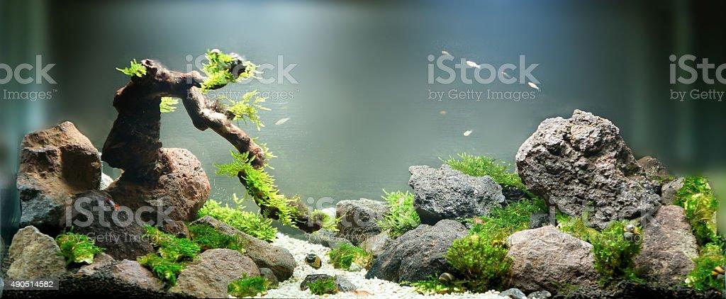small landscape in freshwater aqurium stock photo