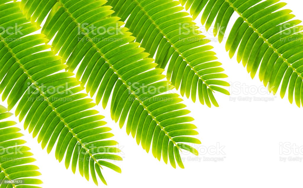 Small leaf royalty-free stock photo