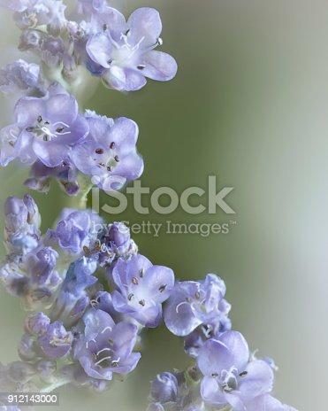 istock Small lilac shrub flowers 912143000