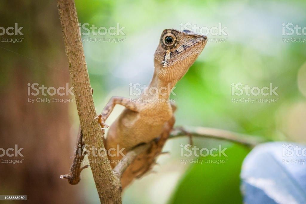 Green lizard on a tree. Beautiful closeup animal reptile eye in the...
