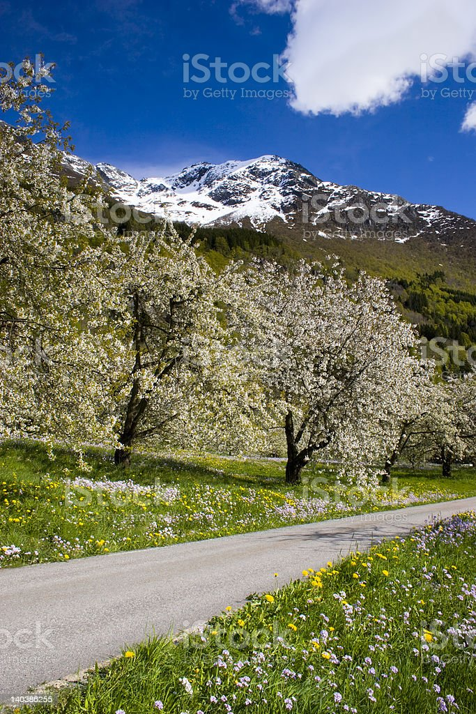 Small, local road through springtime fiels of Hardanger, Norway. stock photo