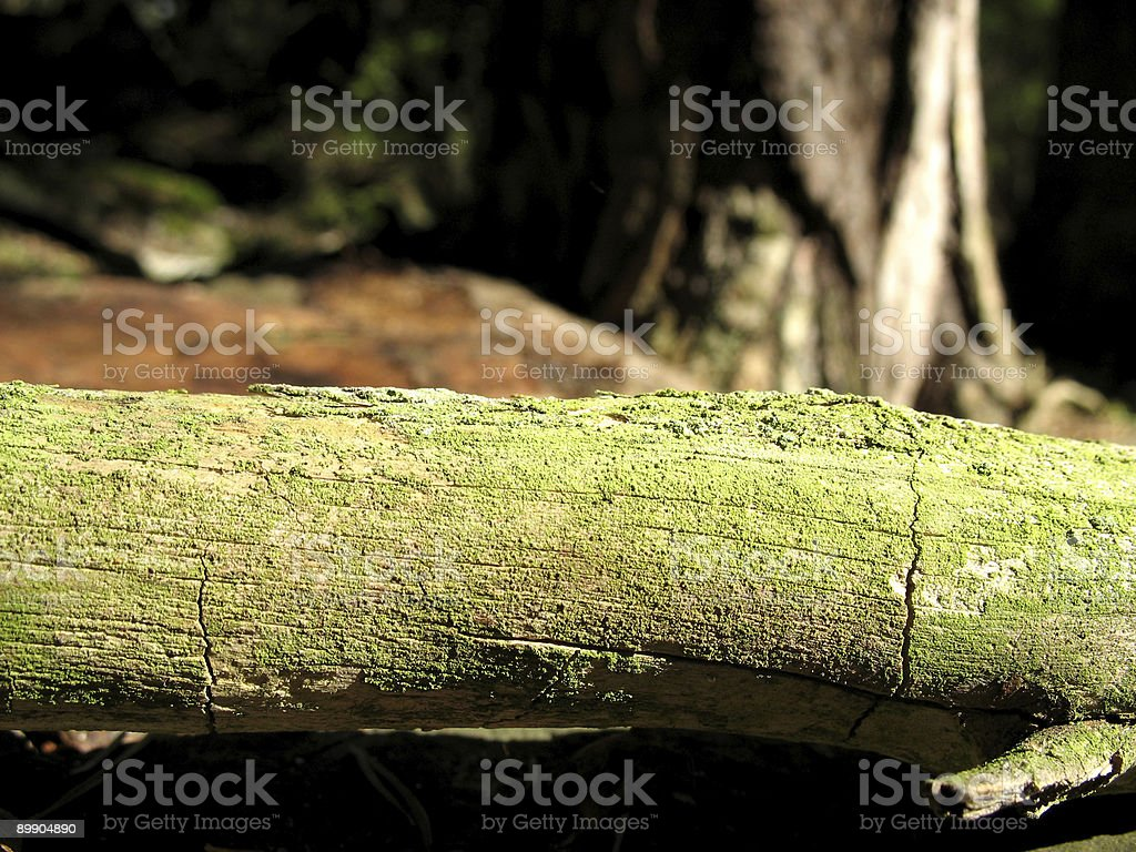 Small log royalty-free stock photo