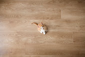 Small lonely ginger and white kitten looking up at camera