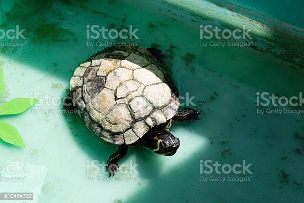 Small marine turtle picture id610454722?b=1&k=6&m=610454722&s=612x612&h=1 1zxra2ohrltceu zbo7pdwsvj joo4jswqm4wafji=