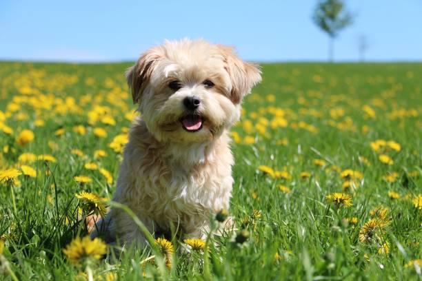 kleine gemischte Hund Porträt im Garten – Foto