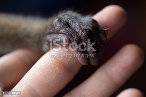 A small monkey hand holding a human finger. Animal welfare and protection