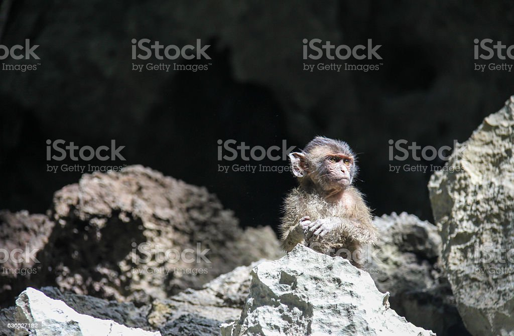 Small Monkey stock photo