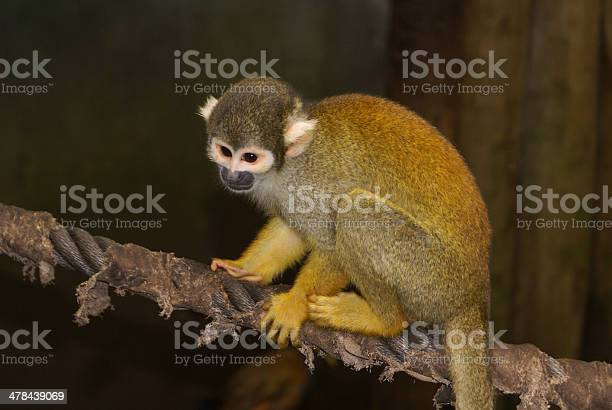 small monkey sitting on a rope at the zoo