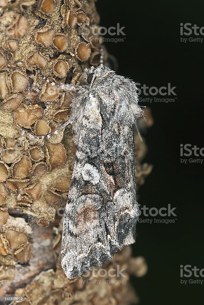 Small moth sitting on stem, macro photo royalty-free stock photo
