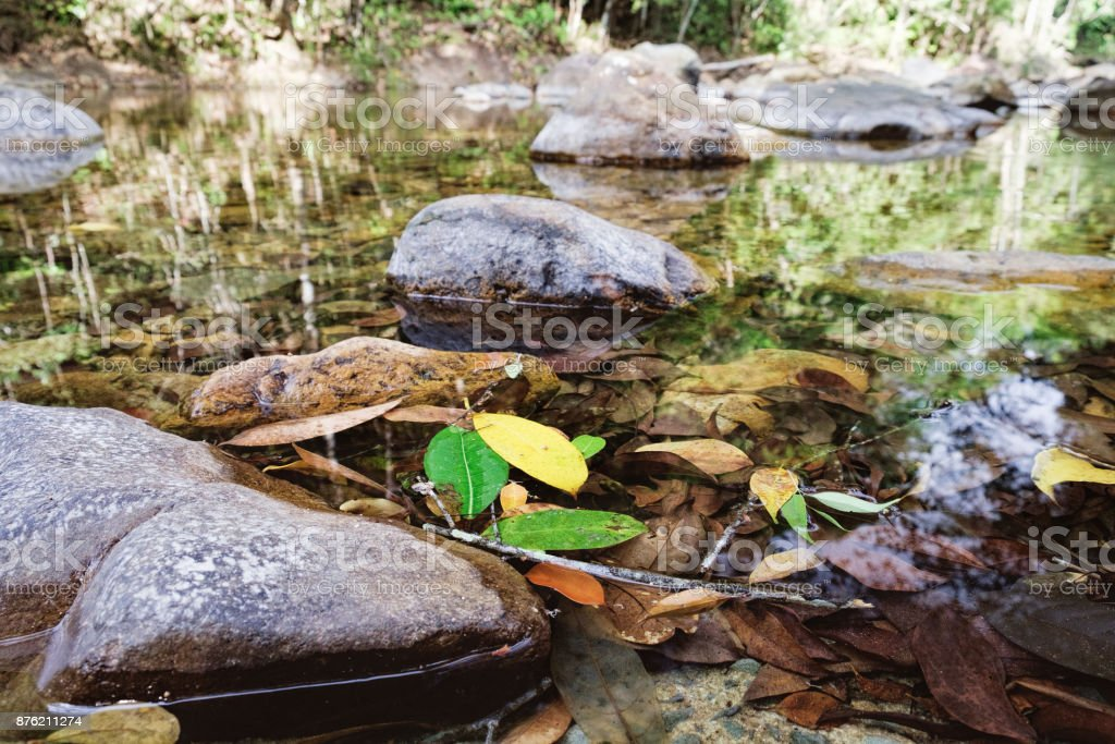 Small mountain stream in jungle stock photo