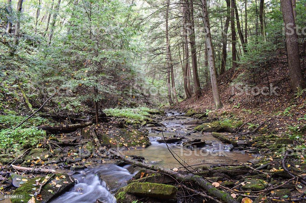 Small Mountain Stream stock photo