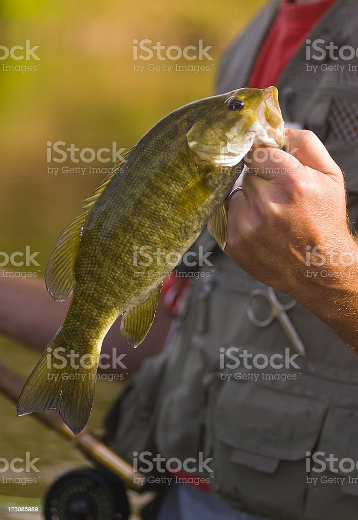 Small Mouth Bass stock photo