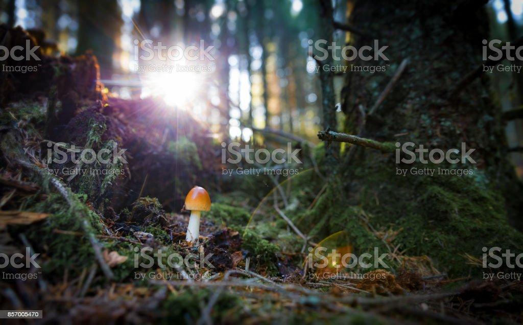 Liten svamp i dramatiska bak ljus tända, solnedgång bildbanksfoto