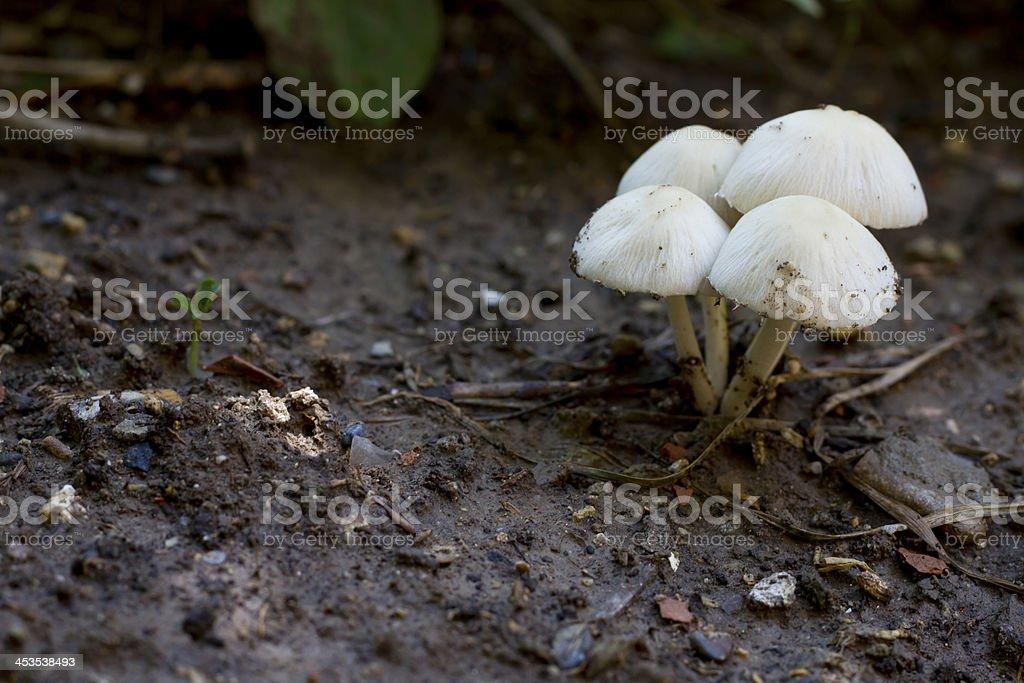 Small Mushroom royalty-free stock photo