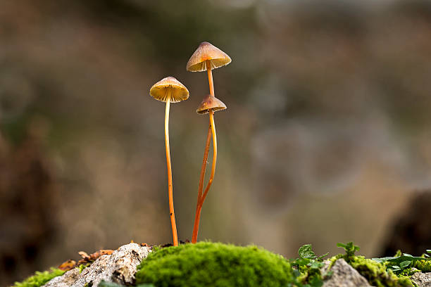 Small mushrooms in Forest stock photo