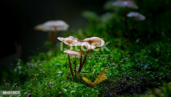 Small mushrooms in Forest