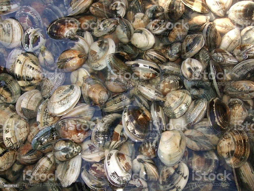 small mussels in wet ambiance royalty-free stock photo
