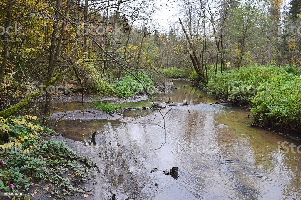 Small narrow river in the deep woods of Central Siberia foto stock royalty-free