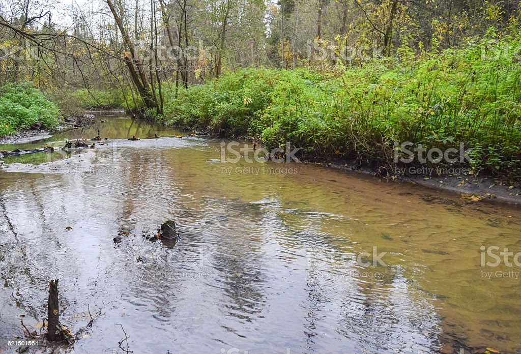 Small narrow river in the deep woods of Central Siberia photo libre de droits
